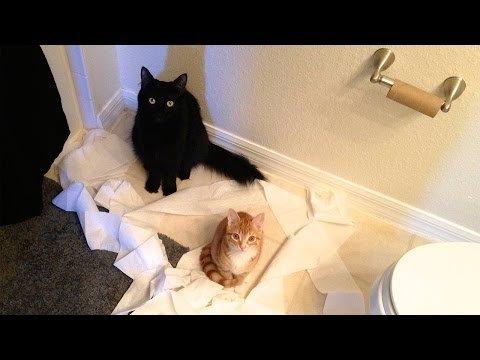 Lõbustav VIDEO: Vaata, just selline ongi kasside loogika