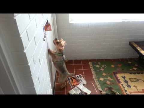 VIDEO: Jälle arved? See terjer vihkab, kui postiljon ukseavast kirju sisse viskab