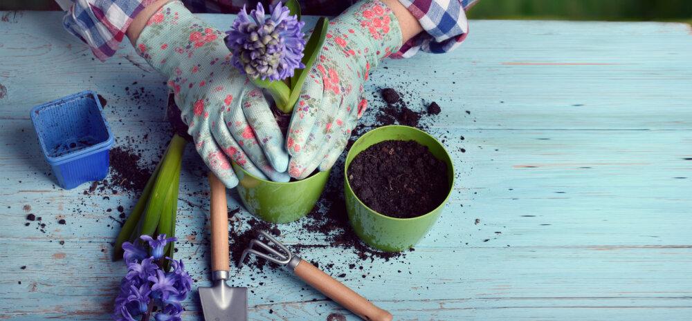 Aprillikuu toimetused toas ja aias