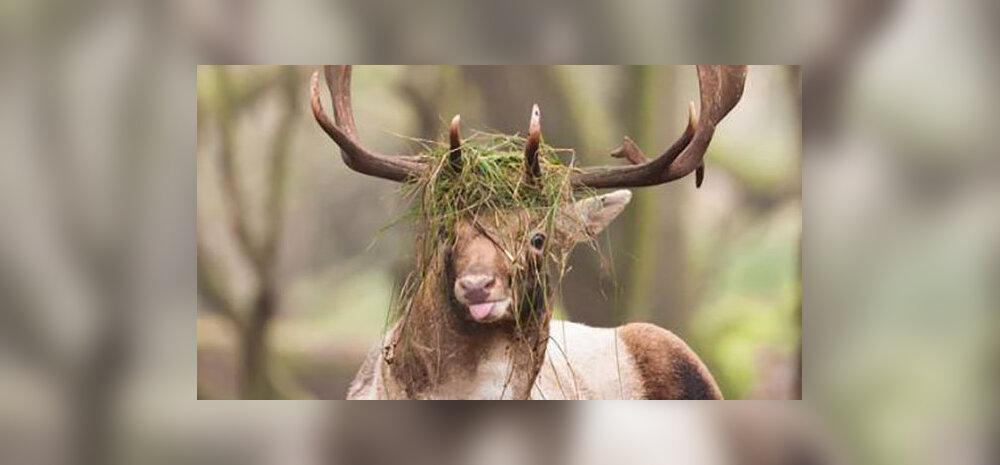 FOTOD | Naerupisar garanteeritud! Need on loomariigi kõige ebafotogeenilisemad olendid
