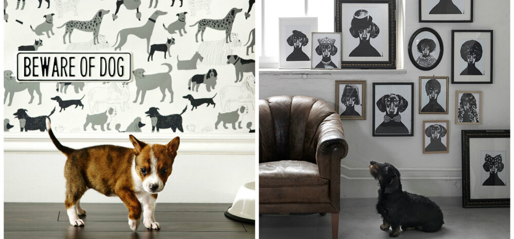 """Head uut koera aastat! Vaata lahedaid ideid, kuidas kodu sisustades tõeline """"koerapalavik"""" tekitada"""
