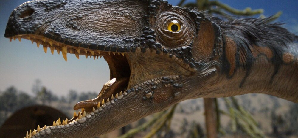 Hämmastav leid: maailma suurim dinosaurus kaalus sama palju kui kosmosesüstik