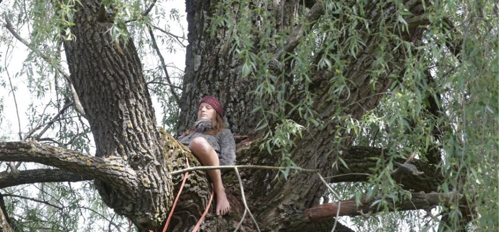 Riigikogu liikmed asusid Haabersti hõberemmelga kaitsele: see puu on looduslik pühapaik, seda tuleb kaitsta