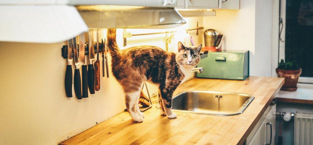 Koristusekspert õpetab: üheksa asja, mille peaksid oma köögist kiiremas korras välja viskama