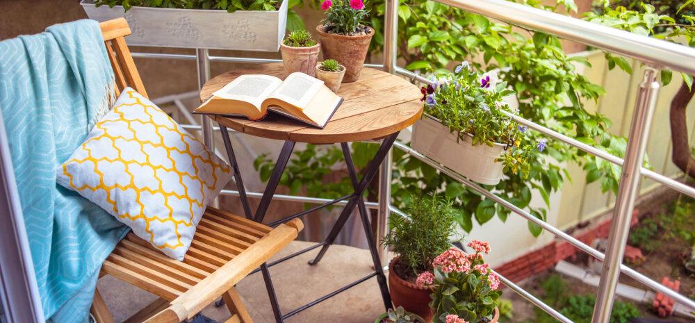Когда солнца мало: что посадить и чем озеленить тенистый балкон