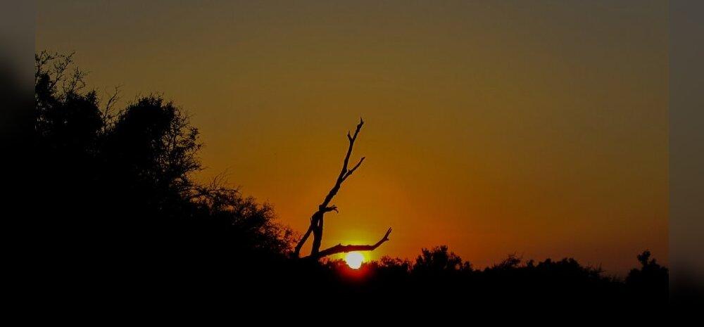 Svaasimaa reservaadid, loomapargid, Aafrika