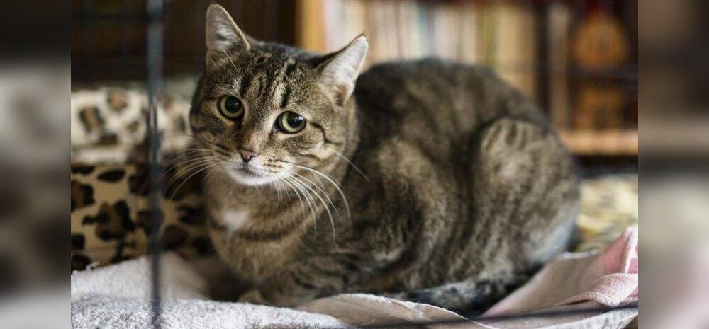 Liisbethi elu pöördeline päev: vaist juhtis selle kassi täpselt õige talu õuele