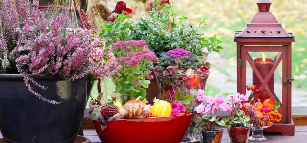 Kümme näidet, kuidas aed sügiseselt värvikaks sättida