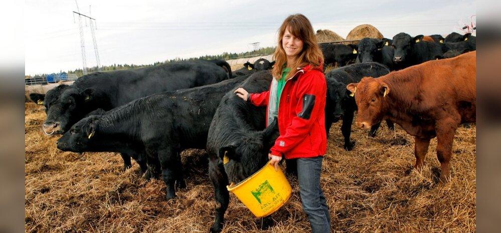 Aasta Põllumees 2013 kandidaat lihaveisekasvataja Jane Mättik