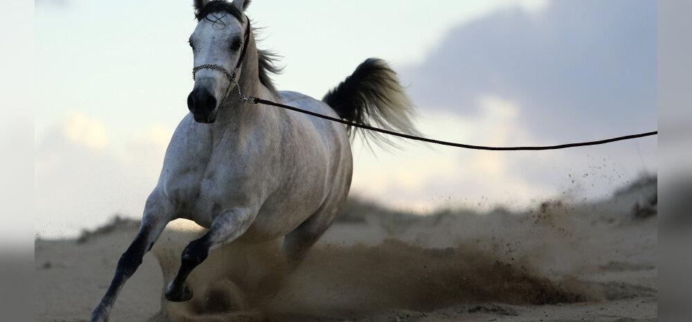 Кто коня на скаку остановит? Астролог рассказал Delfi, каким год Лошади будет для разных знаков Зодиака