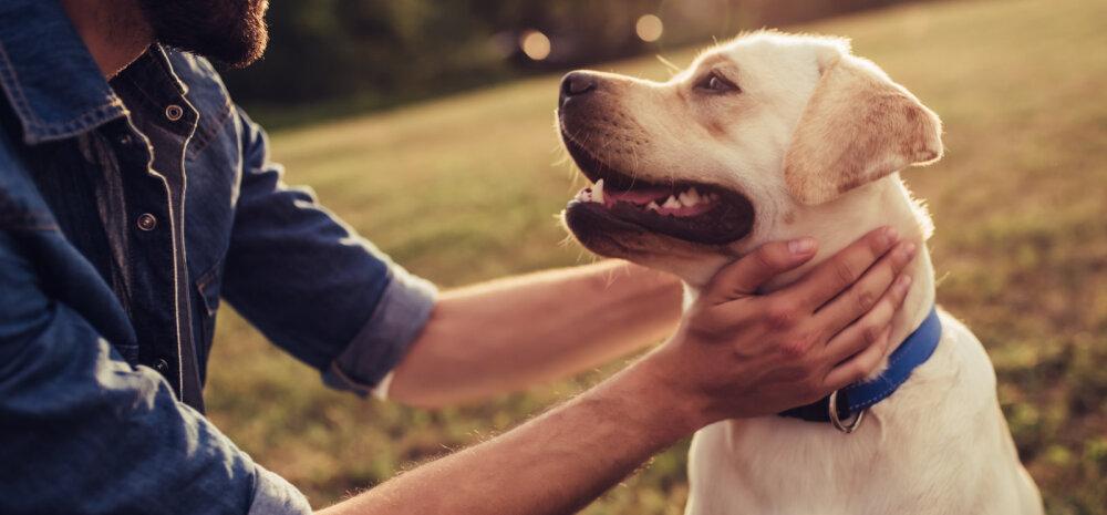 Elumuutus: kuidas mõjub koerale kodu- ja elukohavahetus?