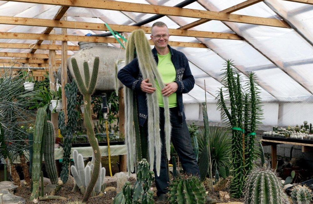 Saare Tõrvaaugu aiandi kaktused