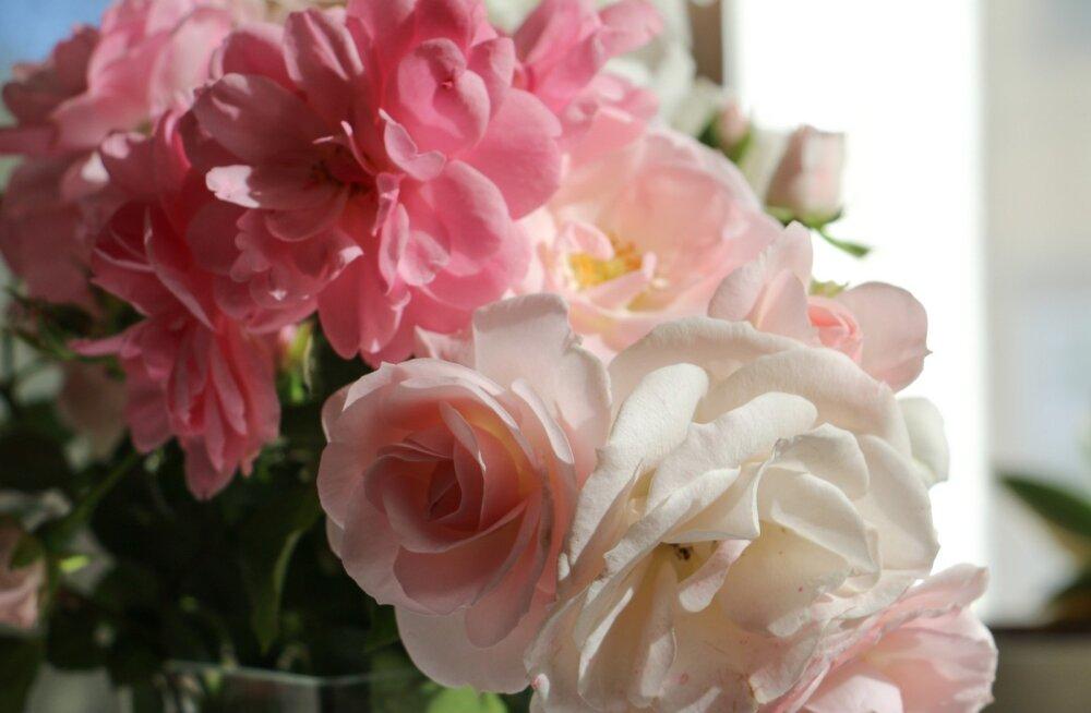 Peaasi, et lillekimp õige omaniku leiab.