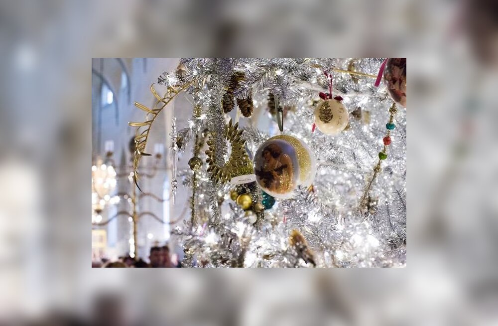 В Музее Нигулисте вновь засияет огнями самая роскошная рождественская ель в Таллинне
