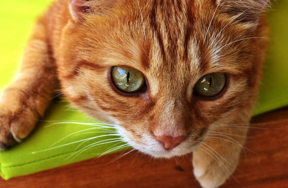 Lugejakiri | eestlase püüdlused Türgis oma kassi elu päästa kujunesid ootamatult piinarikkaks ja lõputuks saagaks