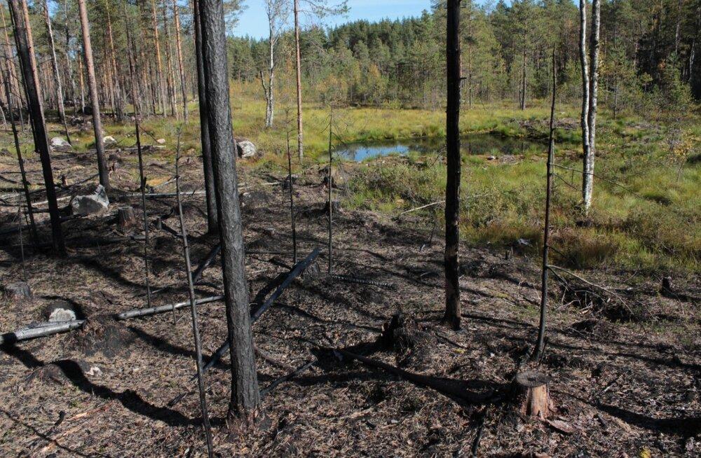 Enne põletamist kaevati Seitsemineni rahvuspargis metsa kõrvale tiigid, kust sai kustutusvett.