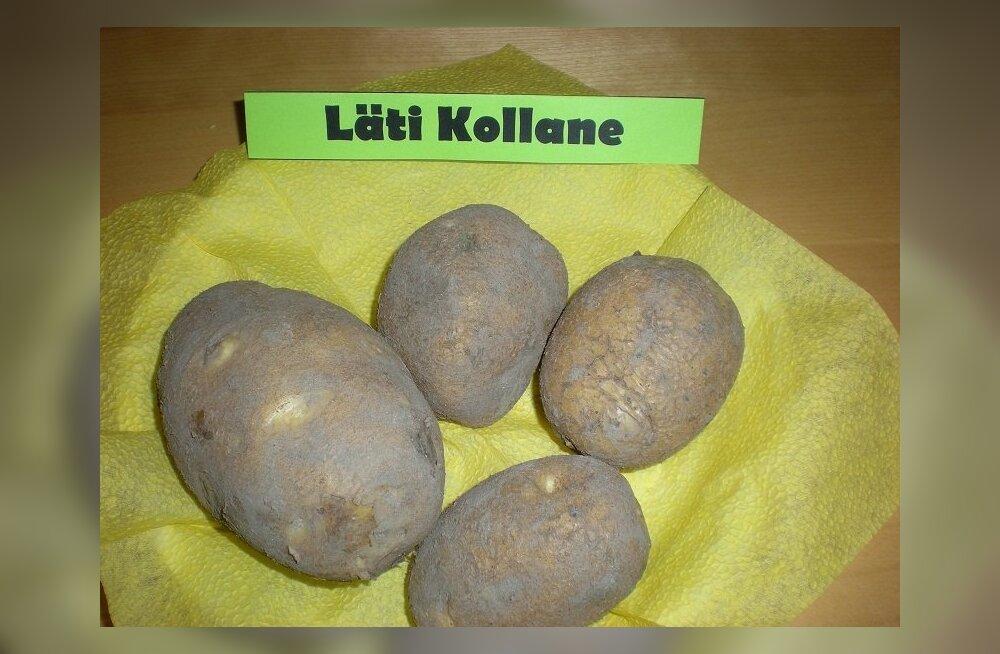 Maitsev kartul Lätimaalt – Varajane kollane