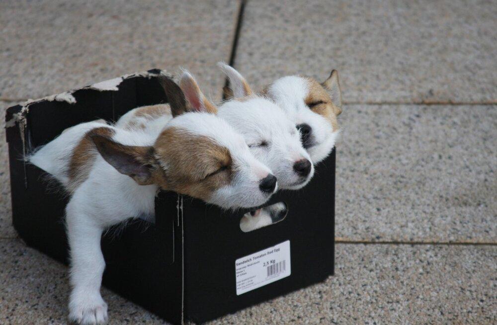 PÕNEV: Koerad näevad unes sind, samas kui kasside unenägudes valitseb surm