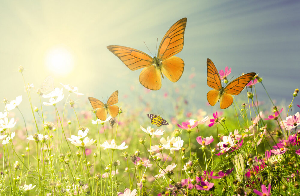 Rahvakalendri järgi on täna tähtis püha - Maaema sünnipäev, mil maa puhkab ning aiatööd on keelatud