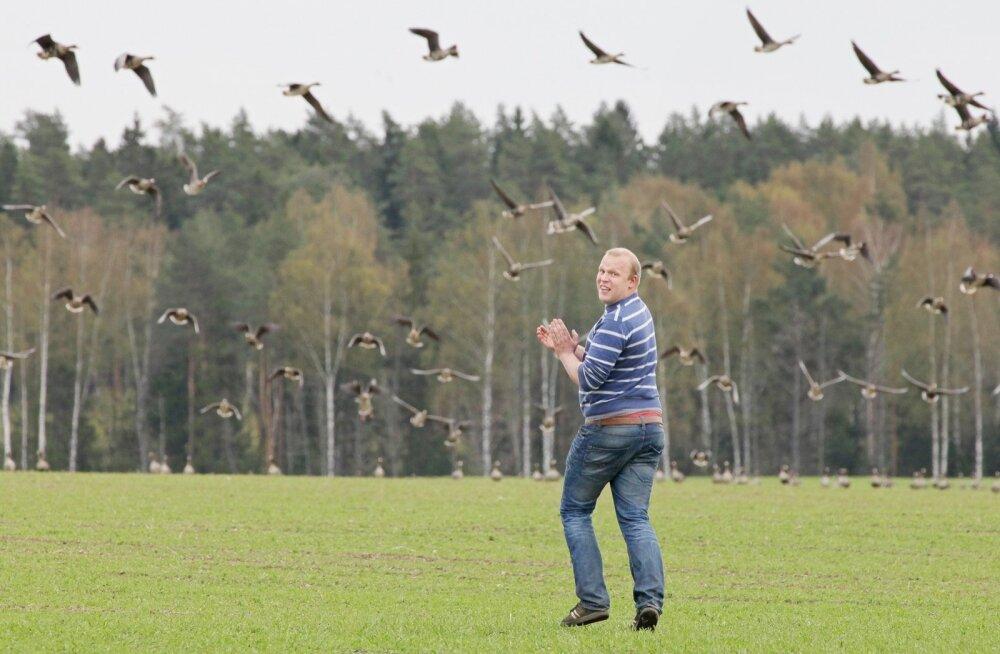 Juhan Ojamaa on aastaid kevaditi hädas olnud viljapõlde rüüstavate haneparvedega. Kas tänavune kevad tuleb teisiti?