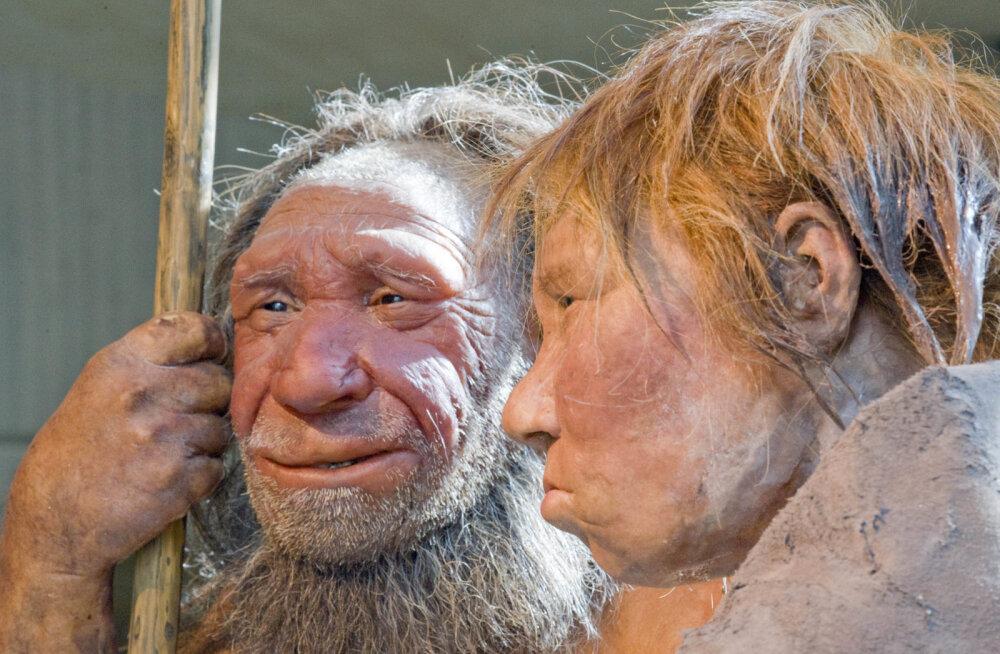 Teadlased plaanivad kasvatada laboris tillukesi neandertallaste ajusid