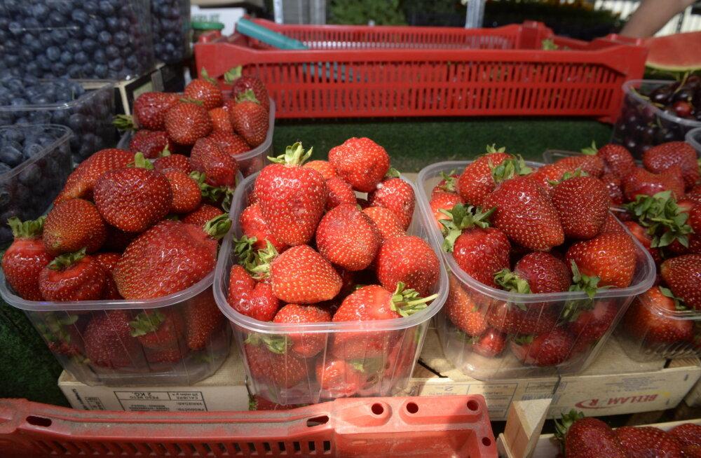 Pikk põuaperiood võib muuta maasikamüügi perioodi lühikeseks