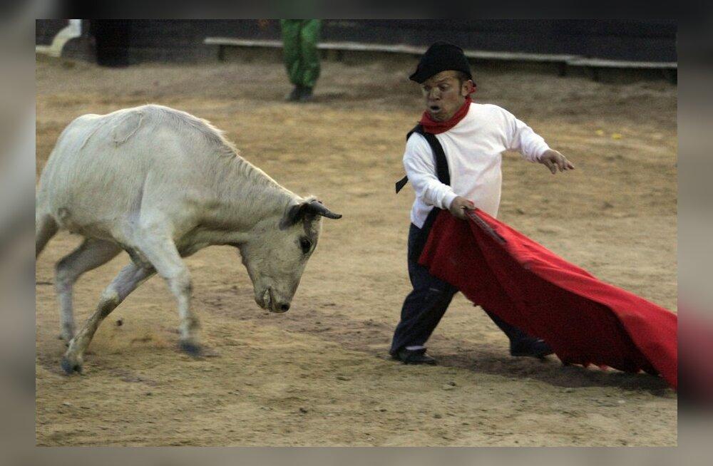VIDEOD: Härjapõlvlase kasvu härjavõitlejad Mehhikost