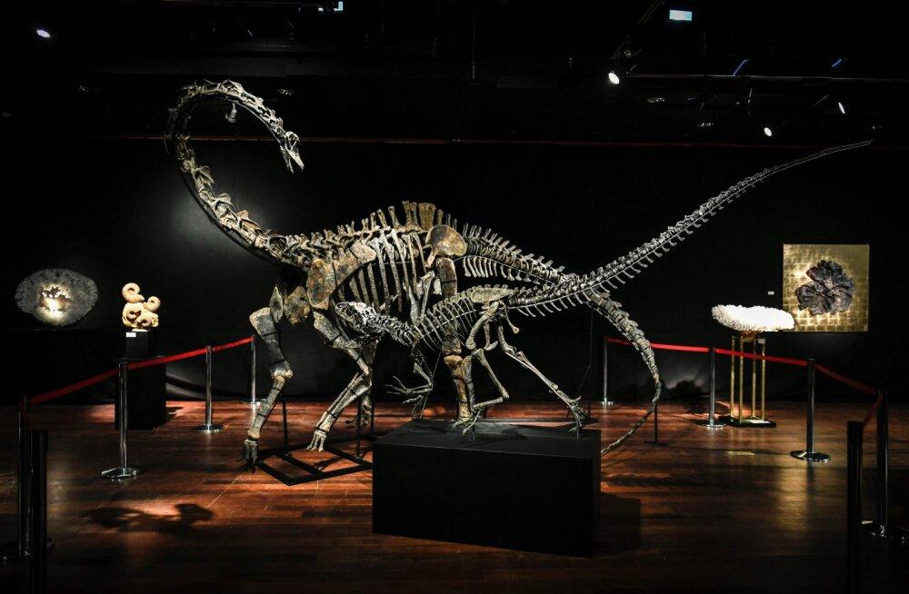 Otsid oma elutuppa uut sisustuselementi? Pariisi oksjonil ootavad omanikku kaks dinosauruse skeletti