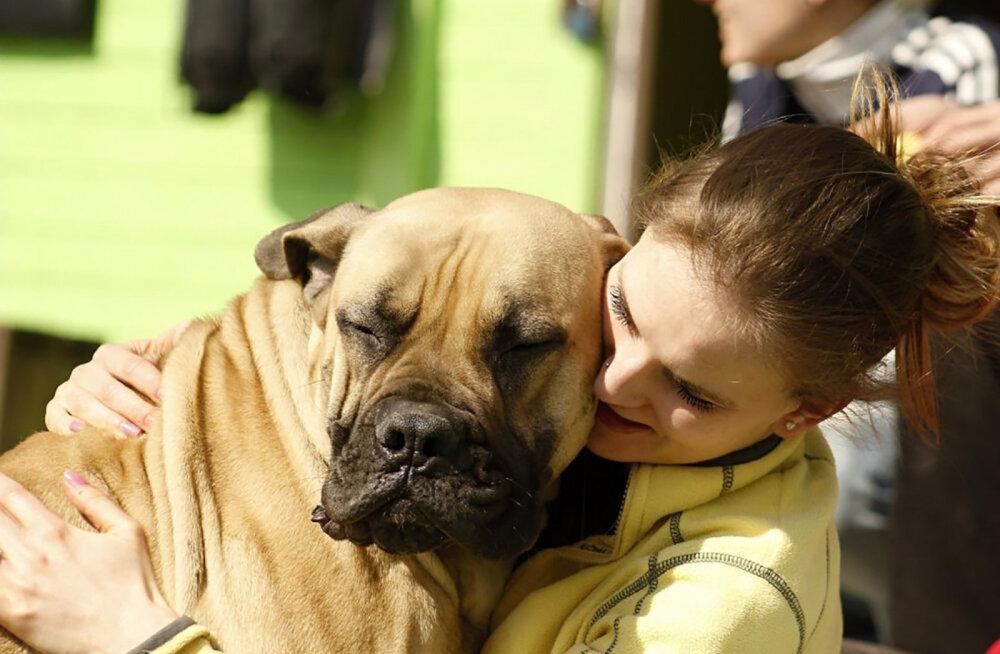 Millised märgid näitavad, et sinu partner on veendunud koeralemb?