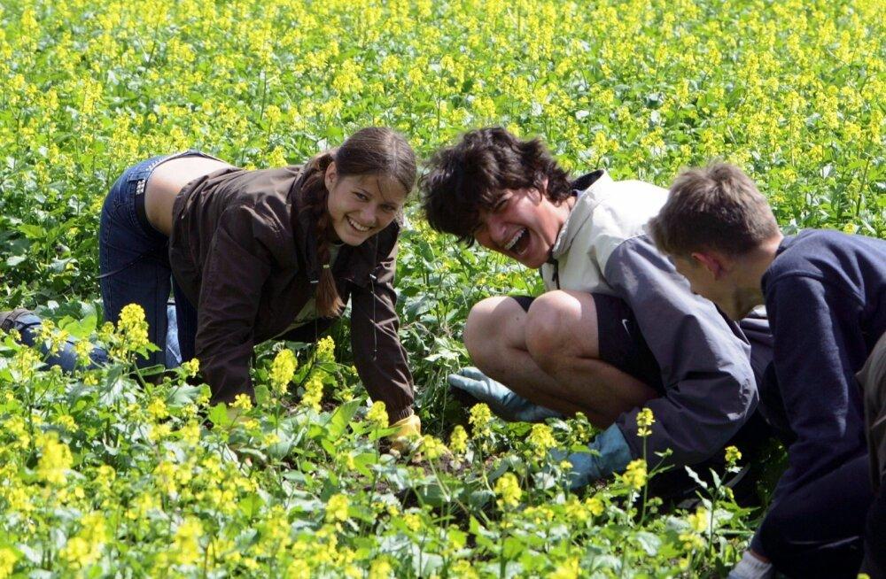 Põllumajandus on noortele hea võimalus töö tegemise õppimiseks.