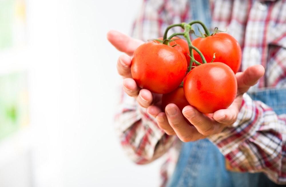 Kuldaväärt kodumaised tomatisordid teevad välismaa sortidele silmad ette
