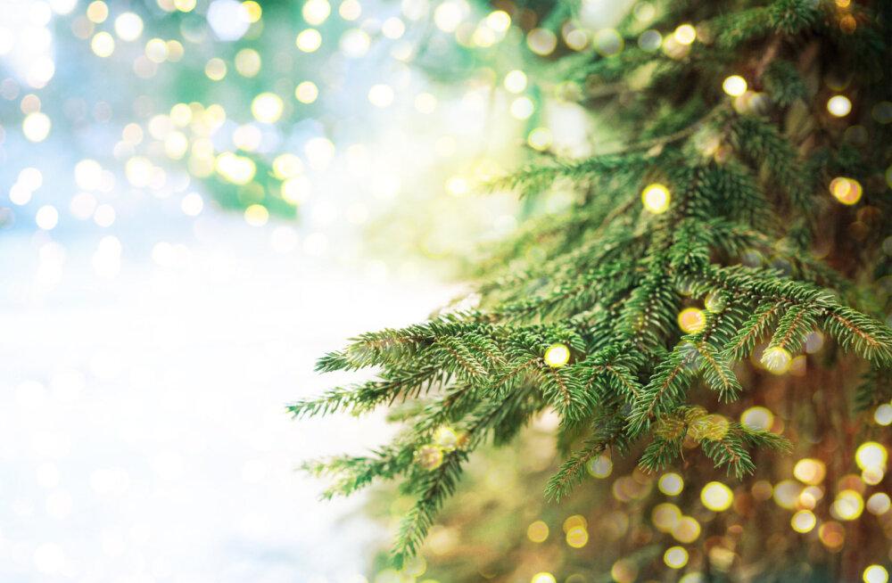 Vaata uutmoodi nippi, kuidas teha jõulupuud