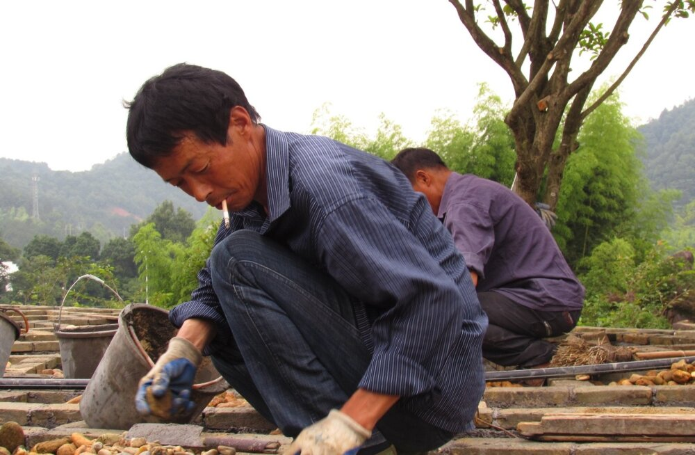 Jiangxi provints, töölised laovad sillutist. Töökäsi Hiinas jätkub.