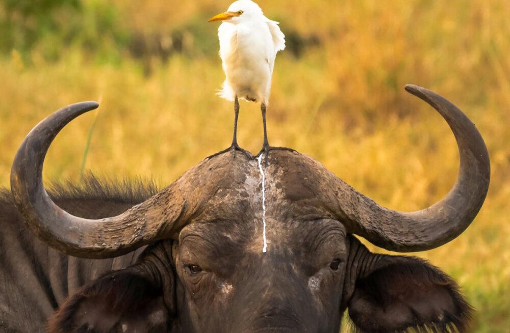 GALERII | Selle nädala kõige naljakamad loomafotod