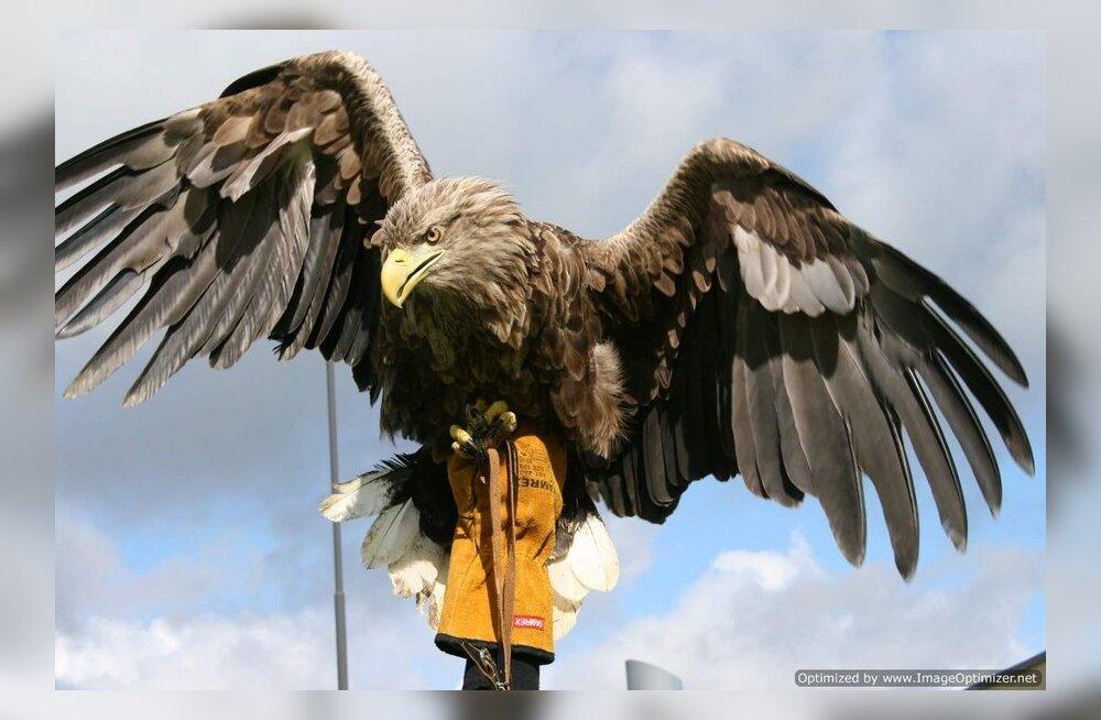 ВИДЕО: В Канаде орел схватил и поднял в воздух маленького ребенка, гулявшего в парке