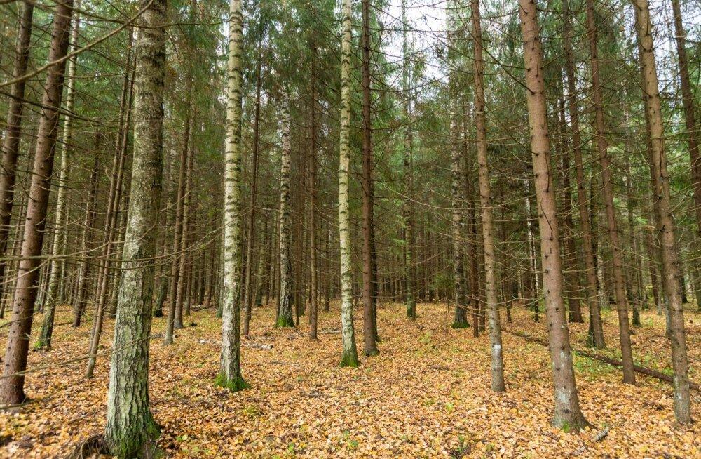 Metsaomanikud kutsuvad poliitikuid üles riigimehelikkusele