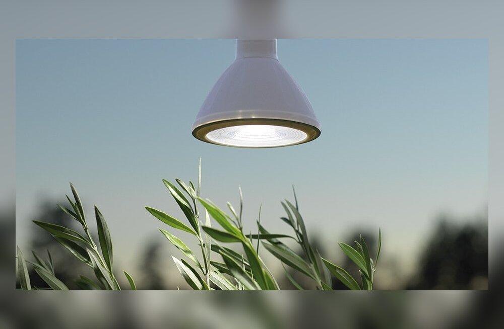 Taimelampe pakutakse ka LED-valgustitena.