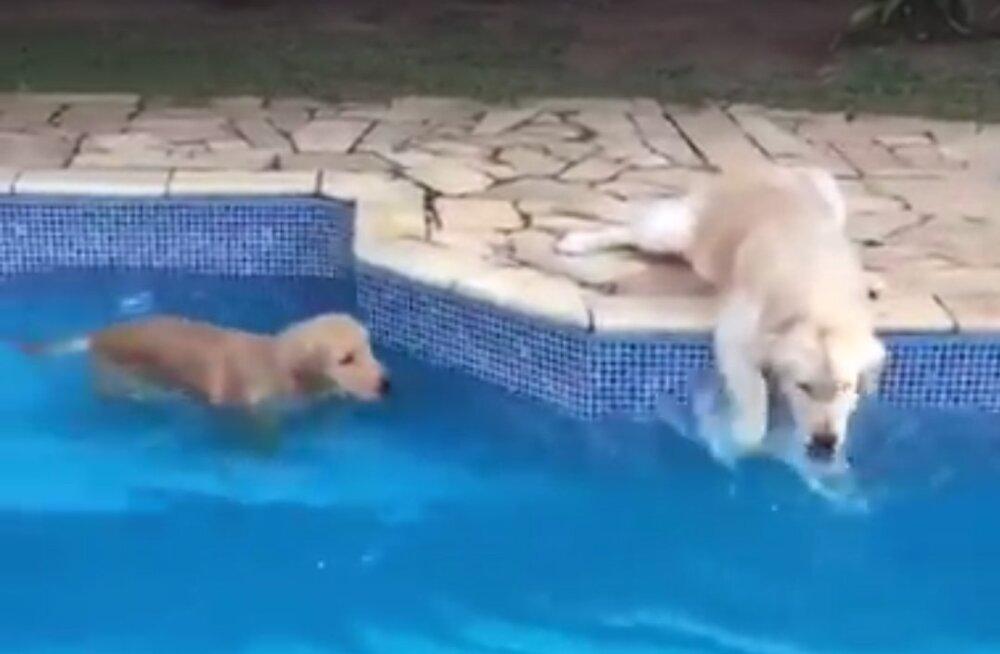 VIDEO   Ega see ujumine siis lihtne kunst ole ja algab ikka korraliku soojendusvõimlemisega!