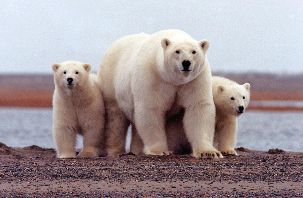 Hullus või geniaalne idee? Teadlased käisid välja mõtte kümne miljoni veepumba abil soojenev Arktika kinni külmutada