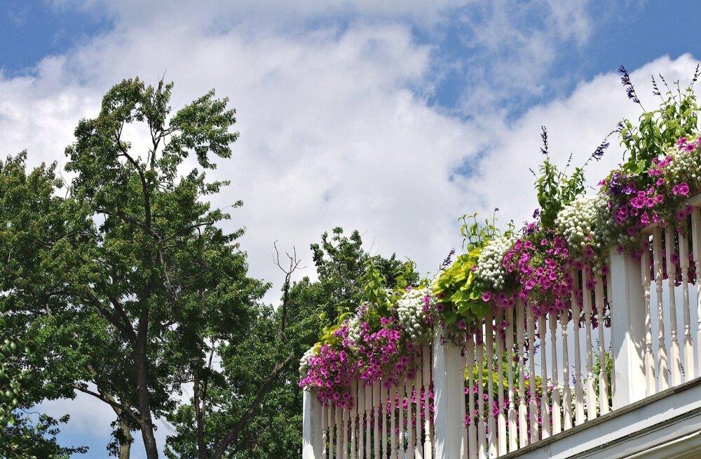 Как превратить балкон в роскошный сад
