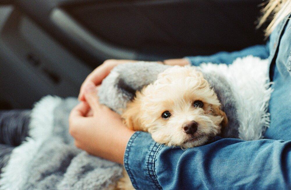 Südantlõhestav muutumine: õnnetu minevikuga koduta koertest said imearmsad perelemmikud