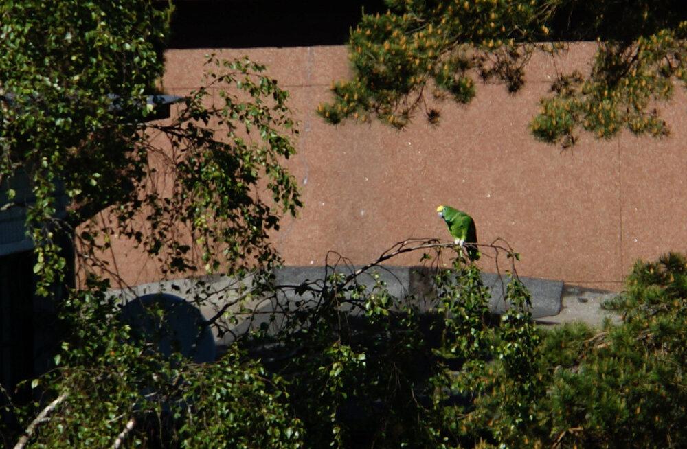 LUGEJA FOTO | Kas koduaias peesitav papagoi näitab märke kliimasoojenemisest?