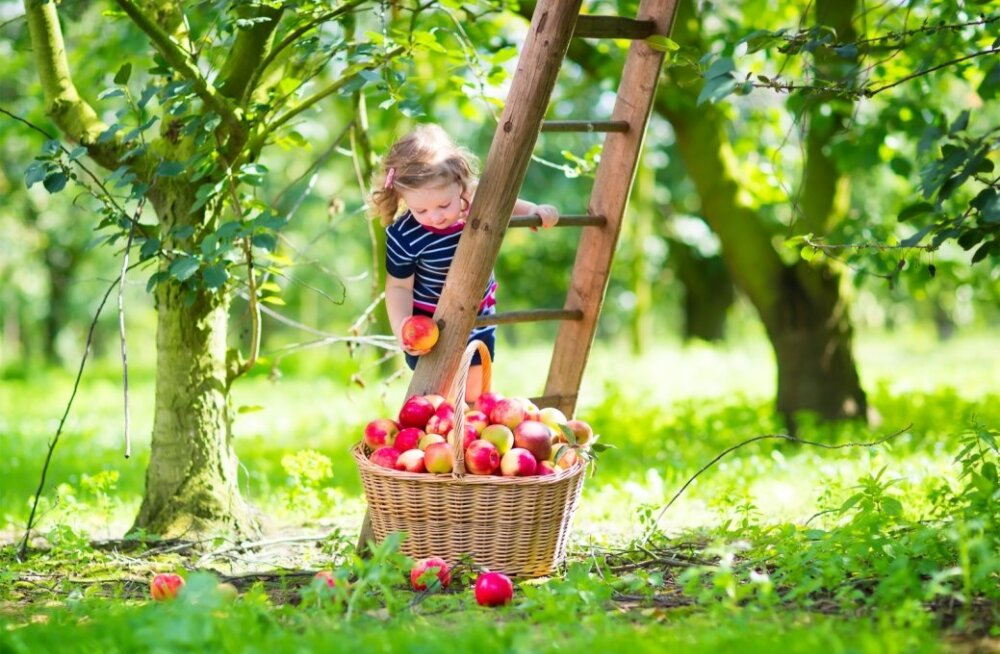 Kaasake aiatöödesse ka lapsi.