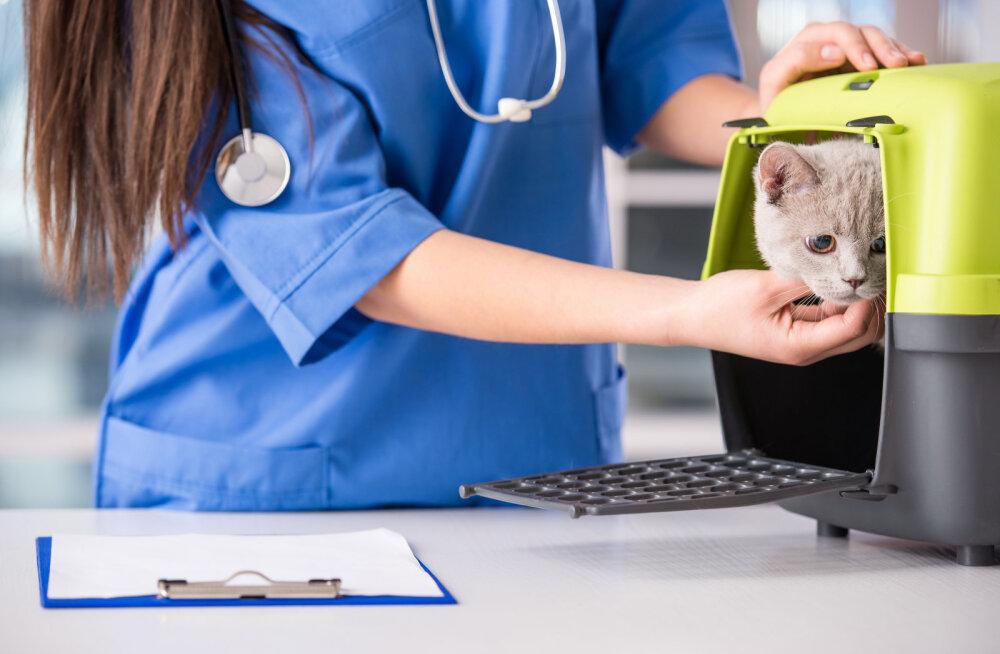 Kas minu kassil on mure? 7 sümptomit, mis viitavad varjatud tervisehädale