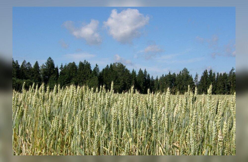Maaleht valib täna aasta põllumehe