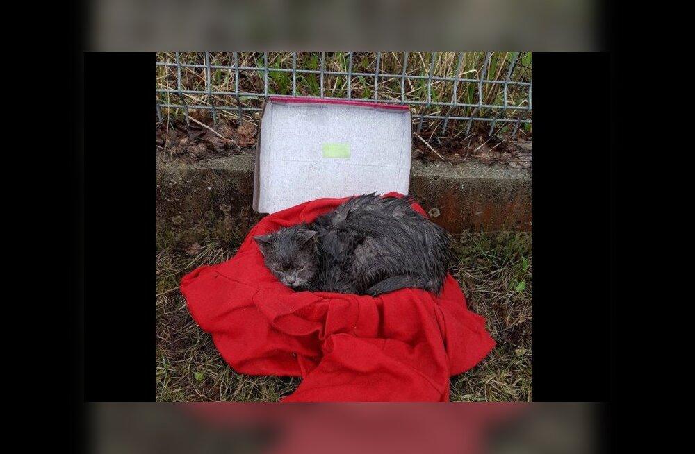 FOTOD   Inimene jättis õnnetu kassi hoiupaiga värava taha vihma kätte