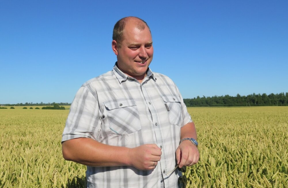 Tõnis Riisk kasvatas suvinisu rekordsaagi 8,36 tonni hektarilt.