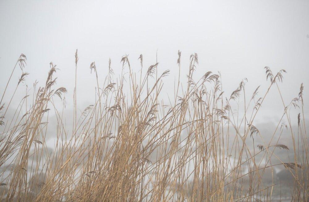 Tasapisi järjest madalamal kaarel liikuval päikesel kulub sageli terve hommikupoolik udulaamade hajutamiseks.