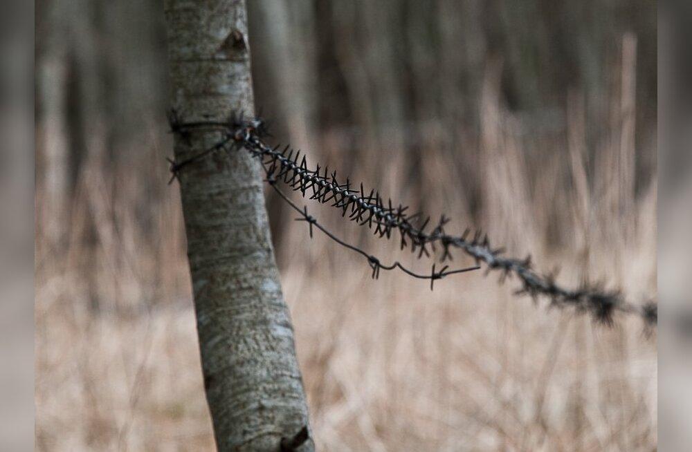 Издевательства в лесу фото 763-218
