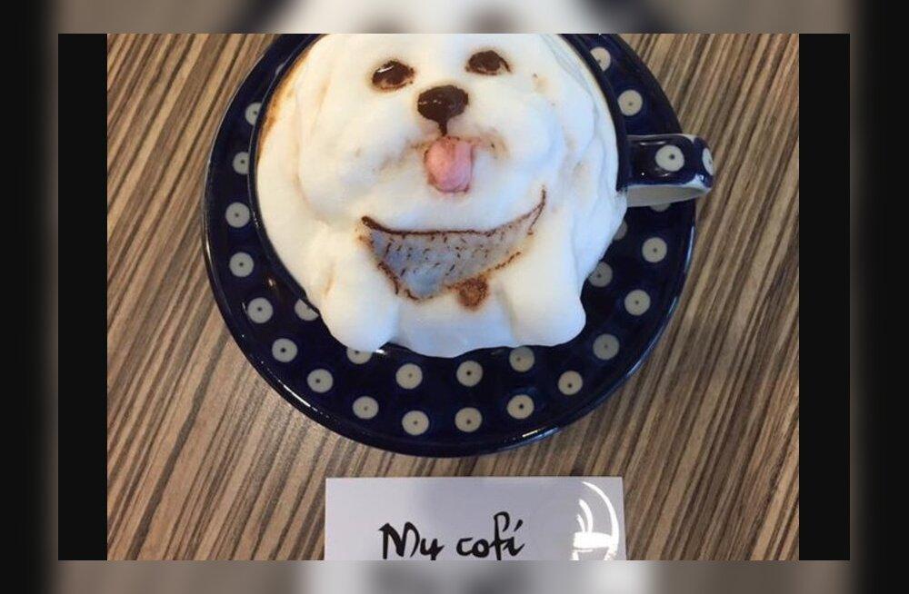 Pilkupüüdvad FOTOD   Kohvik, mis joonistab sinu lemmikloomast unustamatu latte kaunistuse